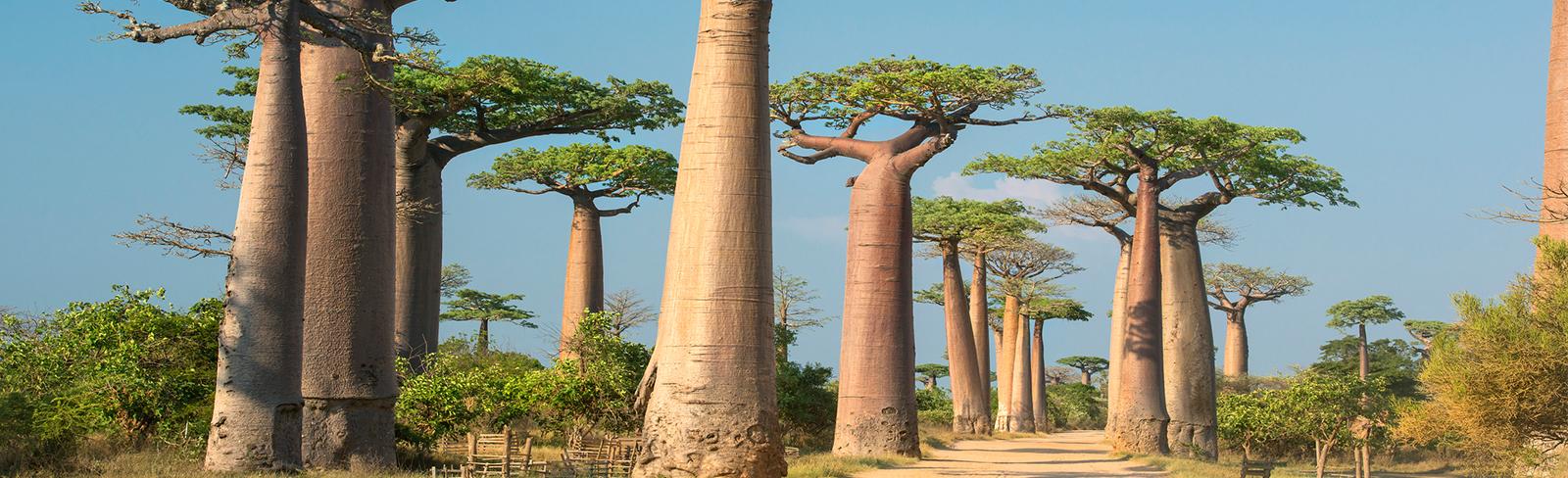 Madagascar_1600x488.jpg